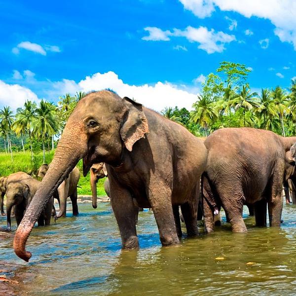 Посетить Шри-Ланку, отдых на природе, курорты и пляжи, поездки на слонах