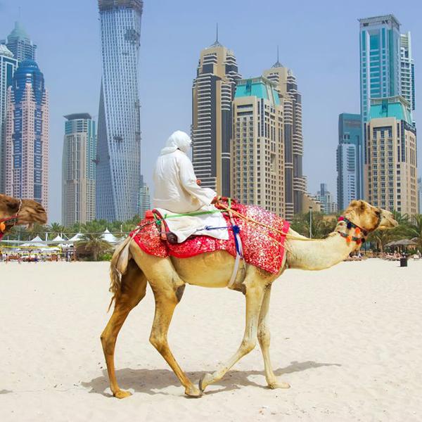 Путешествия на верблюдах по пескам Арабских Эмиратов