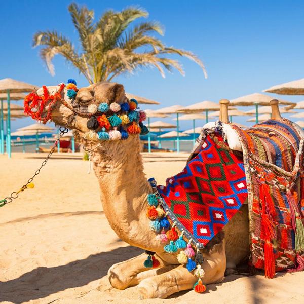 Путешествие на верблюдах по Тунису, экскурсии в Тунисе