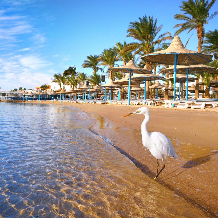 Пляжи Египта, дайвинг, отели, отдых в пятизвёздочных отелях