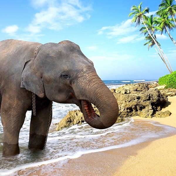 Пляжи и отдых в Индии