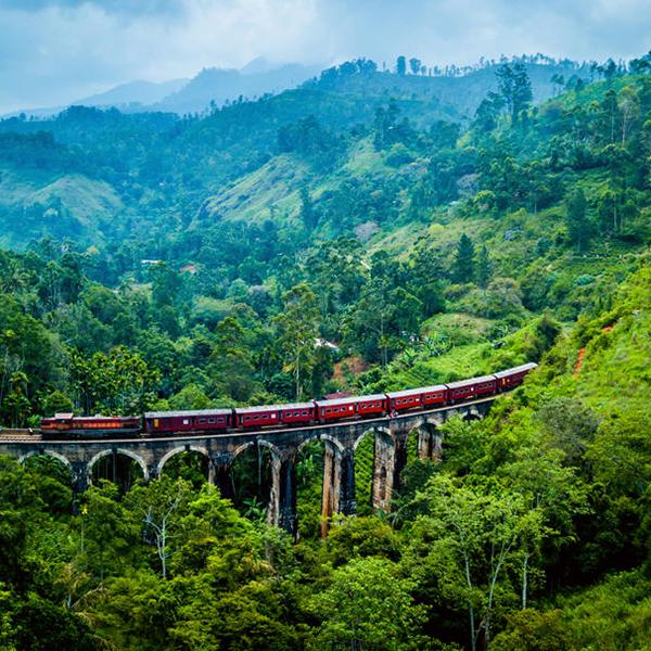 Поездки вглубь острова, джунгли Шри-Ланки, яркое путешествие